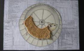 29.04.2020 – Hörsturz – Karriereleiter Hamsterrad